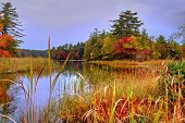 picture of reflection  - Protected wetlands reflect the beauty of the fall forest - JPG