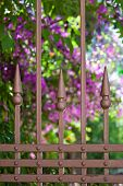 Wrought-iron Fence Close-up With Blooming Flowers