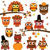 Thanksgiving and Autumn Themed Vector Owl Collection with Branches poster