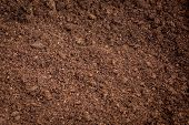 picture of humus  - peat moss soil for cultivated vegetable, agriculture ** Note: Shallow depth of field - JPG