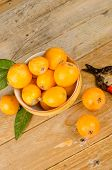 picture of loquat  - A bowl with freshly picked loquats next to old pruning shears - JPG