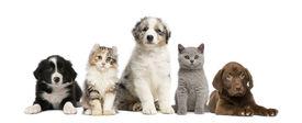 foto of vertebrates  - Group of pets - JPG