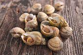 image of whelk  - clam and whelk - JPG