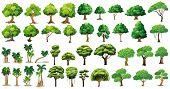 picture of eucalyptus trees  - Diversity of trees set on white - JPG