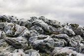 picture of landfills  - Rotten cucumbers in plastic sacks on the landfill.
