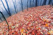 foto of decomposition  - Beautiful autumnal landscape of foggy forest with fallen leaves and old tree trunks - JPG