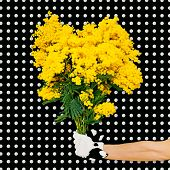 picture of mimosa  - Elegant Hand holding bouquet mimosa flowers on a background polka dots - JPG