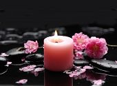 stock photo of black-cherry  - pink cherry blossom with candle on black stones - JPG