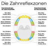 stock photo of reflexology  - Teeth reflexology chart  - JPG