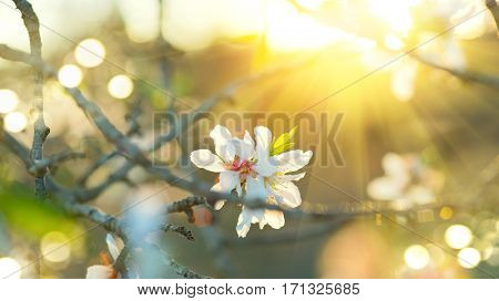 poster of Spring Easter border or background art with blossom. Beautiful nature scene with blooming tree and s