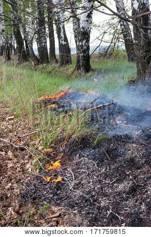 Crawling fire of burning grass
