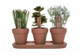 picture of plant pot  - Three herbs chives spearmint and sage in potted plants - JPG