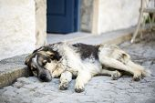 Alone Stray Cat Outdoor. Pet Animal Stray Dog. poster