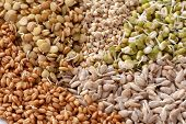 Vegetarianism. Set Of Different Sprouted Seeds For Healthy Eating As Background . Sprouted Seeds: Le poster