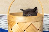 Black Kitten Sitting In A Basket. Kitten, Black, Cat, Basket, poster