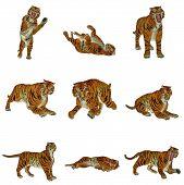 Постер, плакат: Создает набор тигра