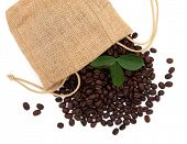 Coffee beans in a hessian drawstring sack and loose with leaf sprigs over white background.