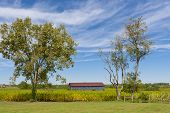 pic of tobacco barn  - Country landscape with barn and tobacco plants field - JPG