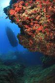 foto of cortez  - Underwater reef and scuba diving boat - JPG