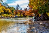 stock photo of guadalupe  - Intricate Intertwined Cypress Tree Roots with Beautiful Fall Foliage on the River at Guadalupe State Park - JPG