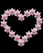 foto of belladonna  - amaryllis flower in heart shape black background - JPG
