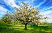 image of meadows  - Idyllic rural landscape in spring - JPG