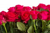 pic of rose close up  - border of dark pink rose flowers with green leaves close up isolated on white background  - JPG