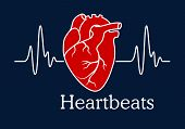 picture of heartbeat  - Health care concept depicting human heart with white wavy line of heartbeats cardiogram on dark blue background with caption Heartbeats - JPG