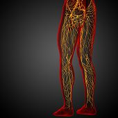 foto of nod  - 3d render medical illustration of the lymphatic system  - JPG