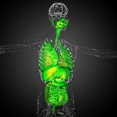 pic of respiratory  - 3d render medical illustration of the human digestive system and respiratory system  - JPG