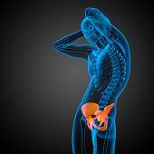 foto of pelvis  - 3D medical illustration of the pelvis bone - JPG