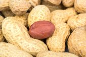 pic of groundnut  - A pile of groundnuts inshell and one red peanuts in the center - JPG