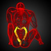 Постер, плакат: Human Digestive System Large Intestine