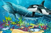 Cartoon Scene With Whale And Killer Whale Near Coral Reef - Illustration For Children poster