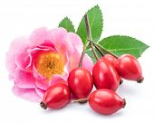 Rose-hips with rose hip flower isolated on a white background. poster