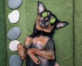 cute Pet Relaxing In Spa Wellness . Dog With A Slice Of Cucumbers On The Eyes.  Funny Concept Groom poster