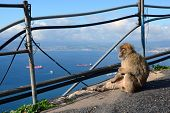 Monkey Sits At The Precipice And Looking At The Sea