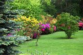 picture of manicured lawn  - Colourful flowering shrubs in a spring garden in shades of yellow pink and red bordering a neatly manicured lush green lawn with a backdrop of dense trees - JPG