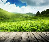 stock photo of malaysia  - wood floor on tea plantation Cameron highlands - JPG