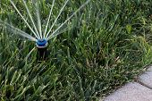 picture of sprinkler  - Set of automatic sprinklers watering fresh grass - JPG