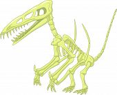 pic of pterodactyl  - Vector illustration of Pterodactyl skeleton isolated on white - JPG