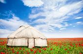 pic of nomads  - Urta nomadic house around poppy flowers on the field at spring time in central Asia - JPG