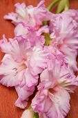 picture of gladiolus  - BrBranch of pink gladiolus on wooden background - JPG