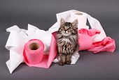 foto of septic  - Cute kitten playing with roll of toilet paper - JPG