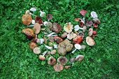 stock photo of edible mushroom  - A birds eye view of a large group of picked edible and inedible wild forest mushrooms arranged in a heart shape on green grass - JPG
