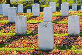 image of arlington cemetery  - Arlington National Cemetery gravestones in autumn  - JPG