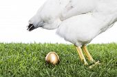 stock photo of laying eggs  - The hen with the golden egg isolated on white - JPG