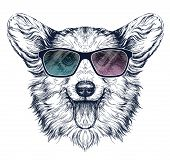 picture of corgi  - Vintage retro hipster style sketch of funny Pembroke Welsh corgi dog wearing sunglasses - JPG