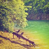 image of italian alps  - Dry Fallen Tree on the Bank of the River in the Italian Alps Instagram Effect - JPG