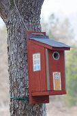 picture of tree house  - Bird house in a tree painted as a traditional country house - JPG